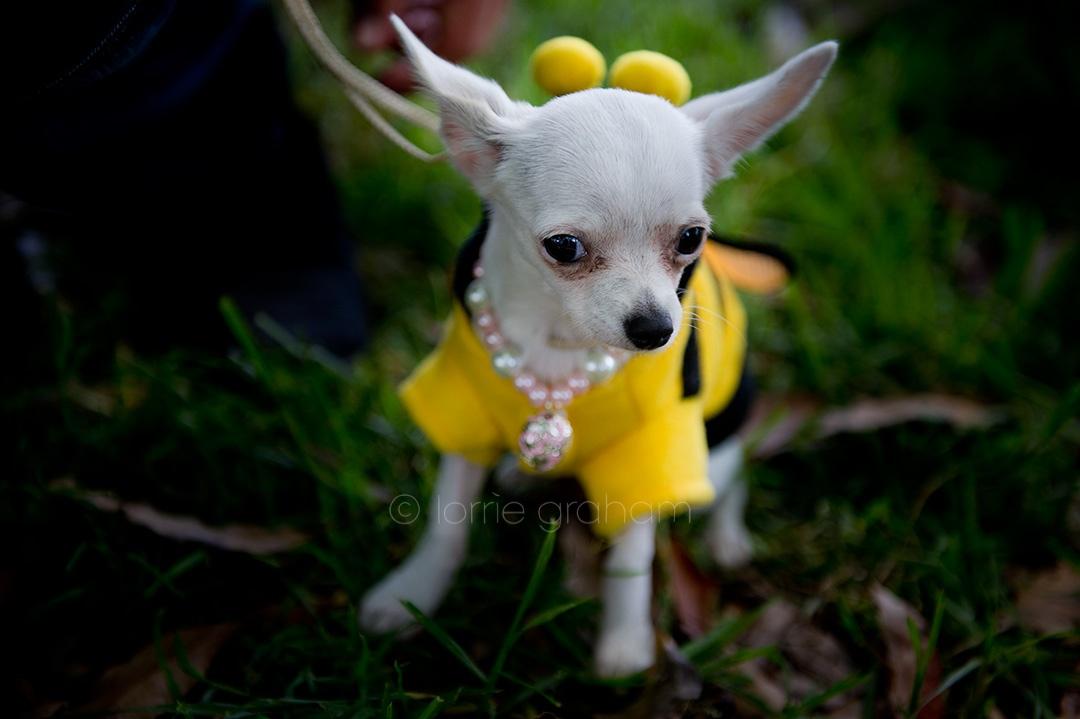 LGBlog_Dog_as_a_Bee_01