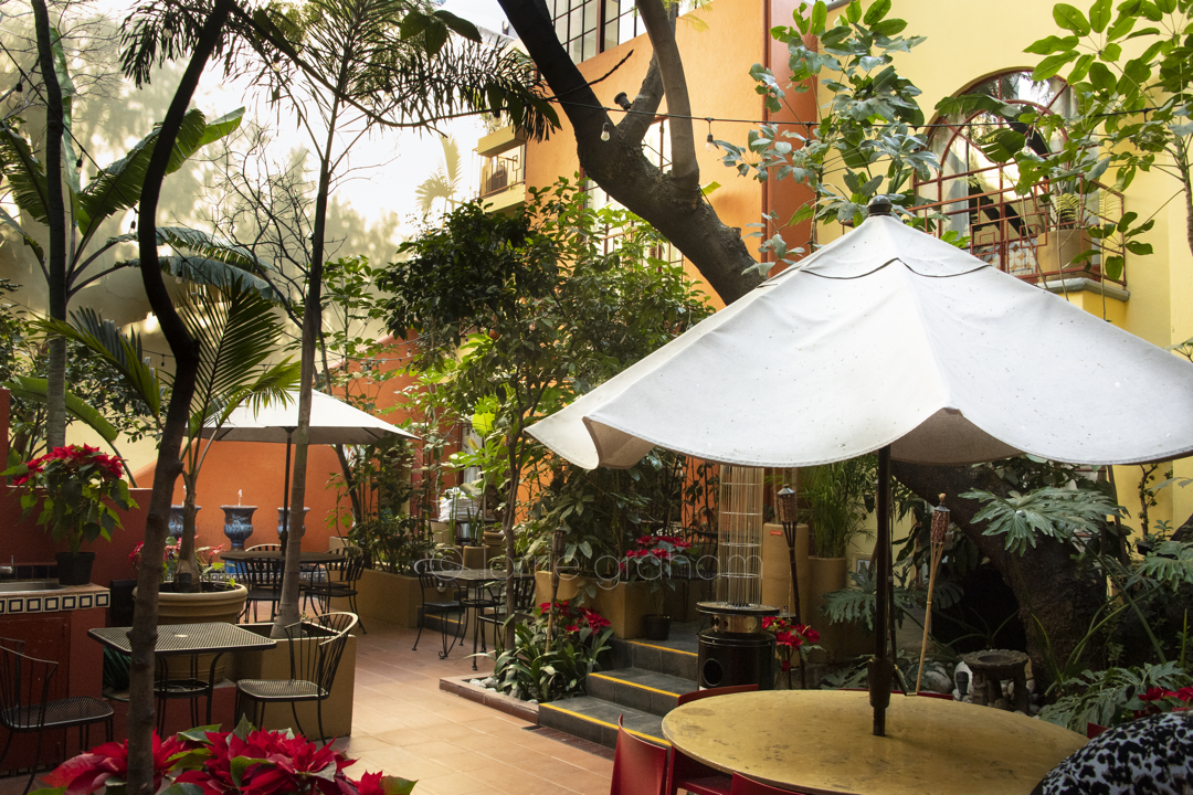 Images from The Red Tree Hotel, Condesa, Mexico City, January 2017