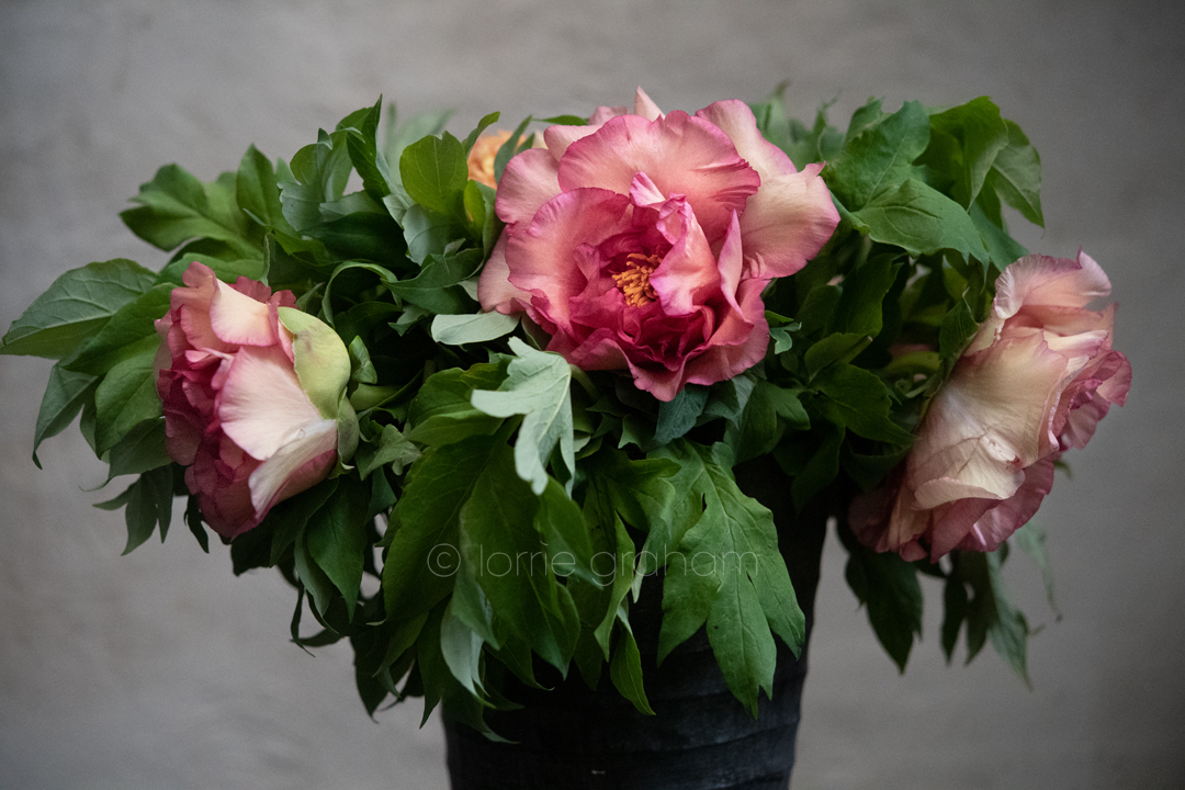 First Peonies of the season and other flowers from the Sydney Flower Market