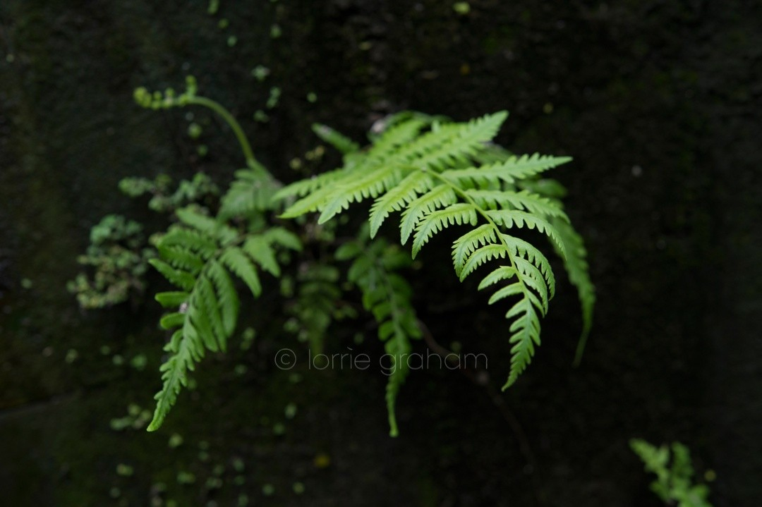 Selection of images from the gardens around Ananda Cottages, UBUD, Bali