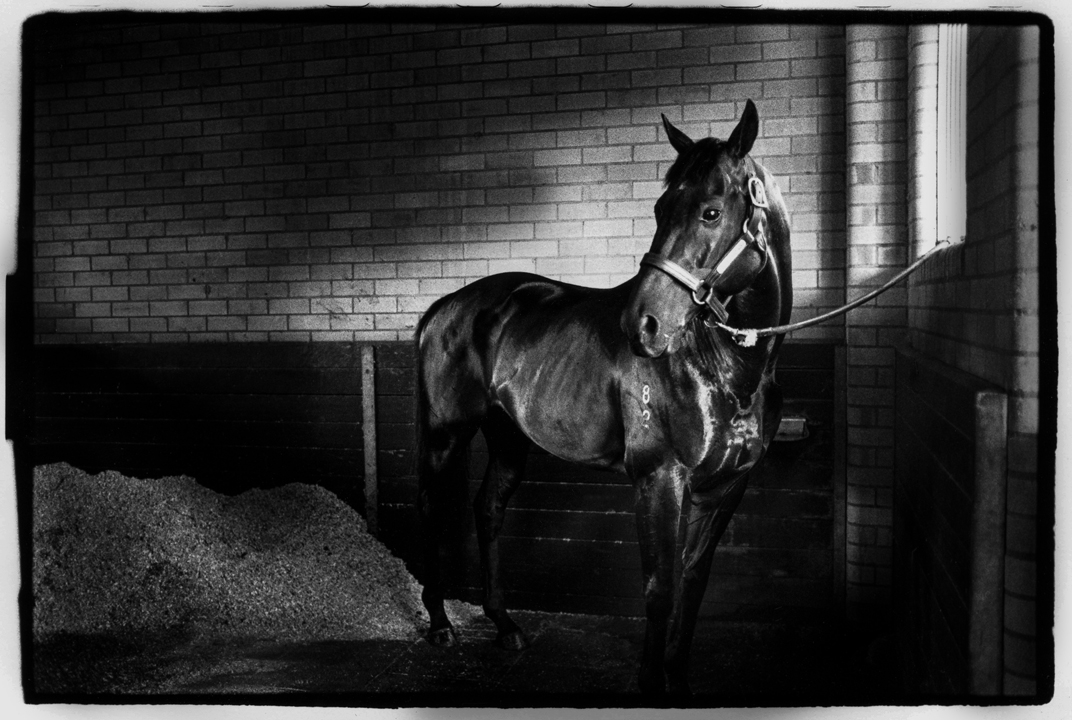 "Past the Post"" is about what happens to all the beautiful thoroughbreds when they can no longer race? © Lorrie Graham"